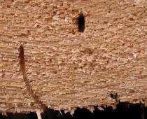 Dřevěné stavby – poškození a obnova