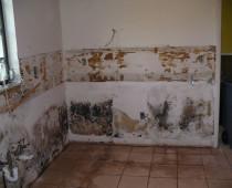 Odstranění plísní v bytě
